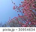 花ピンク盛り 30954634