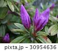 花ピンク盛り 30954636
