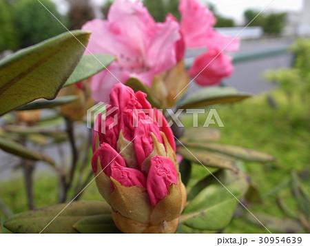花ピンク盛り 30954639