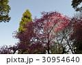 花ピンク盛り 30954640