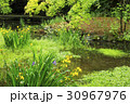 八瀬 紅葉 風景の写真 30967976