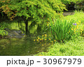 八瀬 紅葉 風景の写真 30967979