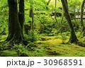 祇王寺 新緑 30968591