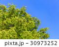 新緑と青空 30973252