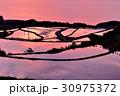 棚田 水田 夕焼けの写真 30975372