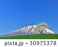 岩手県立大の一本桜 30975378