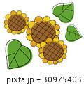 ひまわりの花 30975403