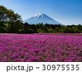 富士山 芝桜 春の写真 30975535
