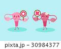 人体 解剖学 悪いのイラスト 30984377