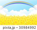 ひまわり 夏 虹のイラスト 30984992