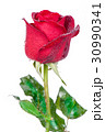 Red rose isolated on white background. 30990341