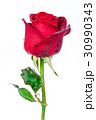 Red rose isolated on white background. 30990343