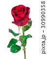 Red rose isolated on white background. 30990358