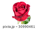 Red rose isolated on white background. 30990461