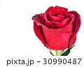 Red rose isolated on white background. 30990487