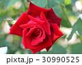 赤いバラの花 30990525