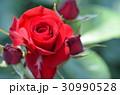 バラの花 30990528