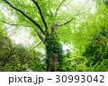 樹木 森林 太陽光の写真 30993042