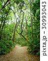 遊歩道 新緑 森林の写真 30993043