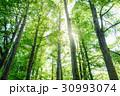 樹木 森林 太陽光の写真 30993074