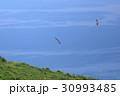 宗像大島 風車展望所 30993485