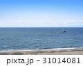 葉山海岸 海 水平線 31014081