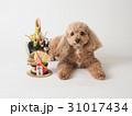 トイプードル 犬 門松の写真 31017434