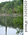 女神湖 湖 枯木立の写真 31020520
