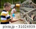 えさ 餌 農園の写真 31024939