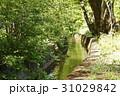せせらぎ 小川 千川上水の写真 31029842