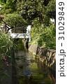 せせらぎ 小川 千川上水の写真 31029849