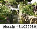 せせらぎ 小川 千川上水の写真 31029939