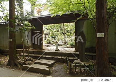 日本庭園 かぶき門(等々力渓谷:世田谷区) 31030671