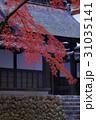 紅葉 秋 楓の写真 31035141