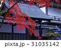 紅葉 秋 楓の写真 31035142
