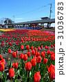 風景 チューリップ 花の写真 31036783