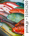 海水魚 魚 食材の写真 31041260
