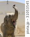 インドゾウ 象 動物の写真 31053545