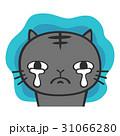 猫 悲しい 泣くのイラスト 31066280