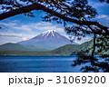 松と富士山 31069200