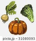 set of hand drawn, engraved vegetables, vegetarian 31080093