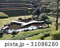 日本庭園 31086280