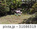 庭の片隅に花 31086319