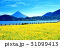 鹿児島県池田湖 31099413