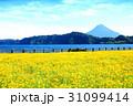 鹿児島県池田湖 31099414