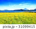 鹿児島県池田湖 31099415