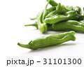 獅子唐 野菜 唐辛子の写真 31101300