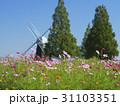 風車をバックに咲くコスモス 31103351