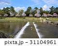 賀茂川の春 31104961