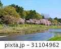 賀茂川の春 31104962